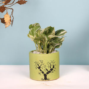 Good Luck Money Plant in Ceramic Pot