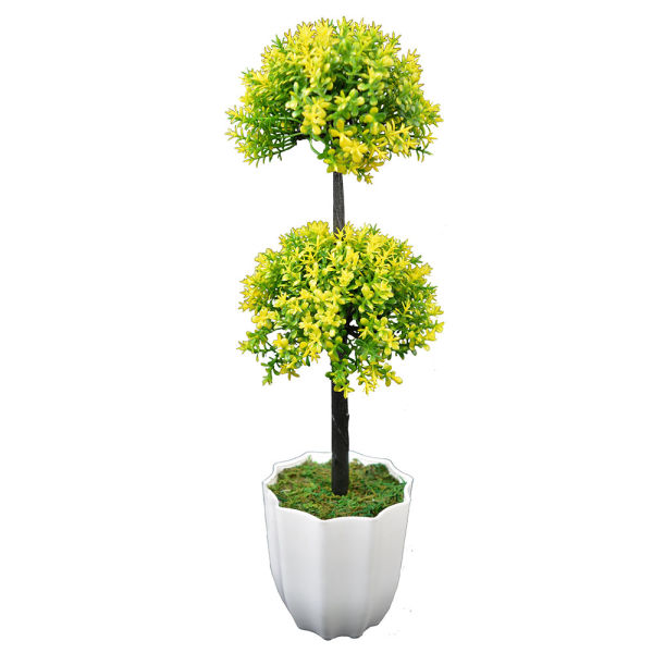 Buy Long Bonsai Yellow DDT