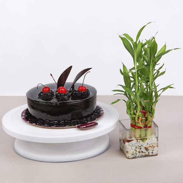 Buy Chocolate Cake and Bamboo