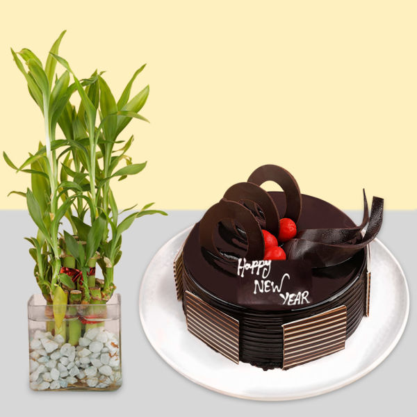 Buy Chocolate Cake With Lucky Bamboo