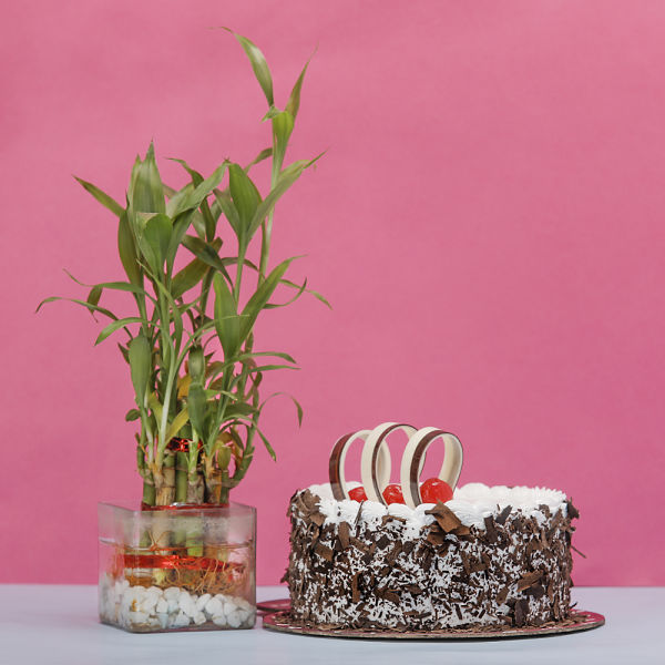 Buy Blackforest Cake with Bamboo