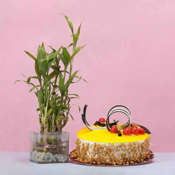 Buy Bamboo with Butterscotch Cake