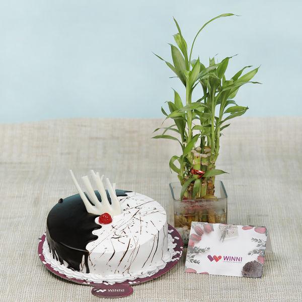 Buy Choco Vanilla Fusion Cake With Bamboo