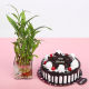 Buy Black Forest With Bamboo Plant