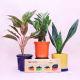 Buy Refreshing Plants & Chocolate Combo