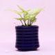 Buy Golden Syngoniun Plant In Blue