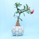 Buy Flowery Potted Plant