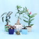 Buy Set of 5 plants with Ganpati Idol