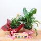 Buy House Plants & Delightful Chocolate Combo