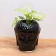 Buy Golden Syngonium in Black Buddha Pot