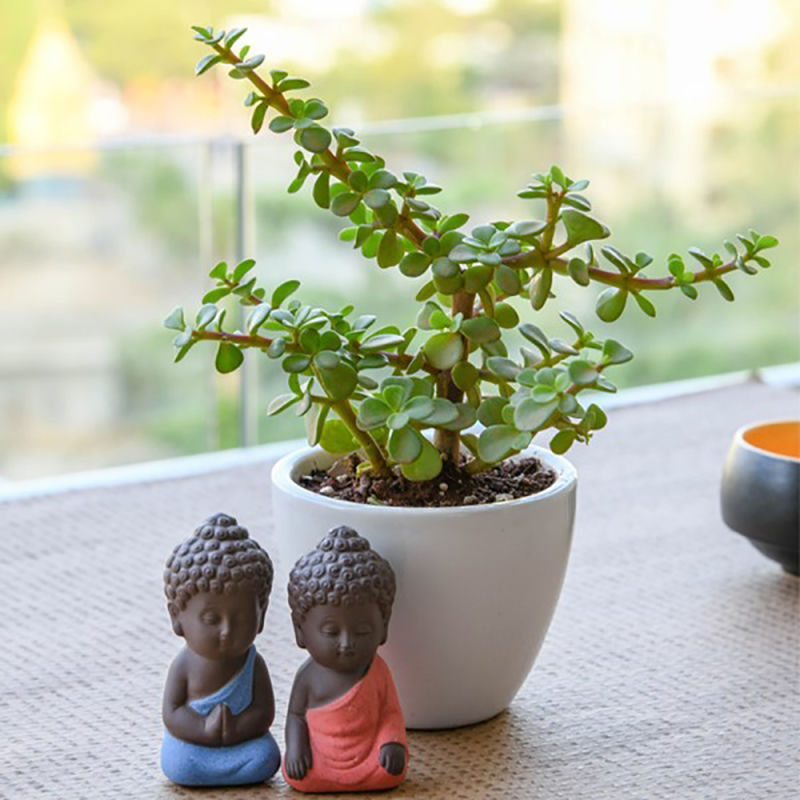 Spread Luck and Happiness with Jade plant and Buddha | Winni.in